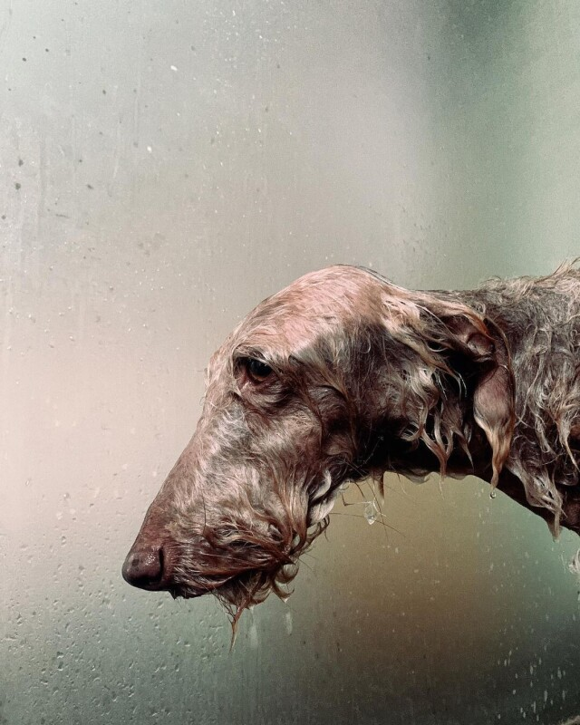 Пёс Редис. Фотограф Джек Дэвисон