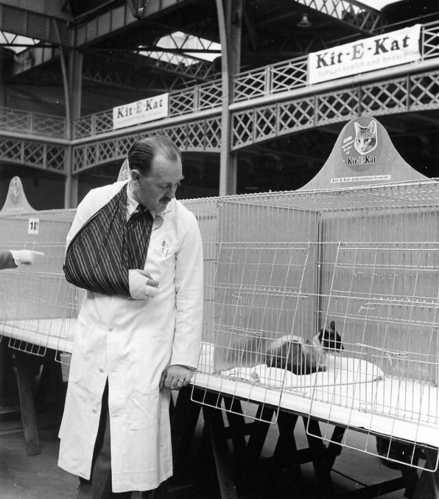 Сиамский кот в клетке. Лондон, 1950. Фотограф Робер Дуано