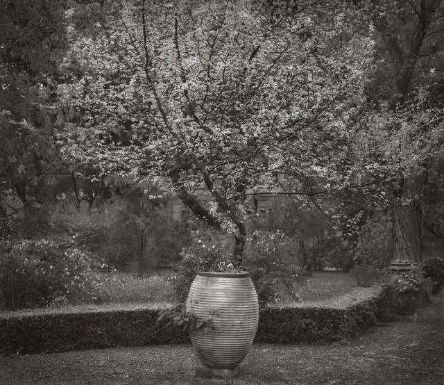 Ботанический сад Джардино дей Семпличи, Флоренция. Бет Доу
