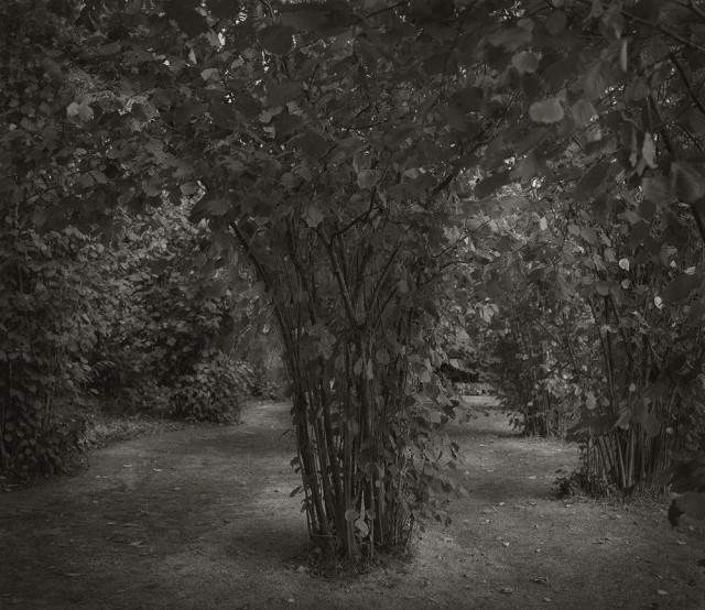 В саду замка Сиссингхёрст. Бет Доу