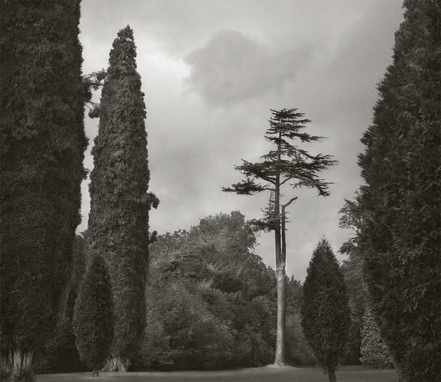 Деревья, Бленхеймский дворец. Бет Доу