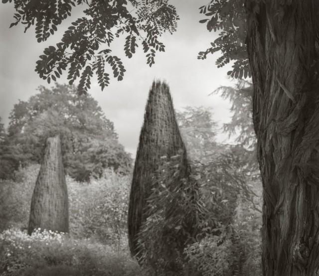 Деревья, Хидкот. Бет Доу