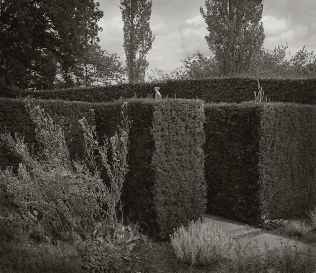 Живая изгородь, замок Сиссингхёрст, Англия. Бет Доу