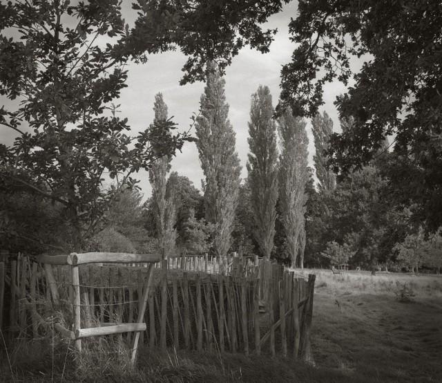 Изгородь, замок Сиссингхёрст. Бет Доу