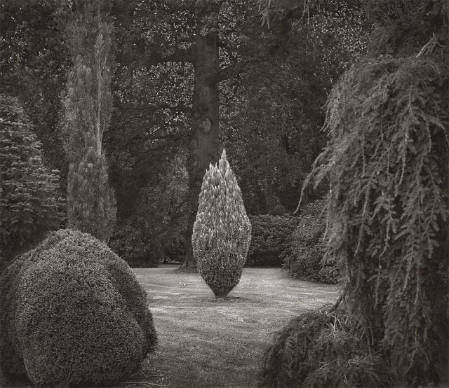 На поляне, Уэйкхерст Плейс, Англия. Бет Доу