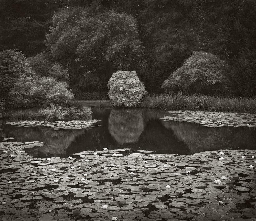 Пруд с лилиями, ландшафтный сад Биддулф Грейндж, Стаффордшир, Англия. Бет Доу
