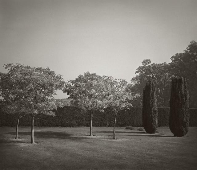 Шесть деревьев, Бейтманс, Англия. Бет Доу