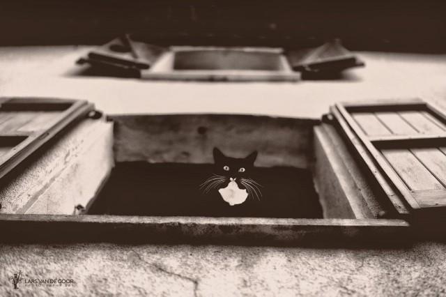 Кот-Дали. Автор Ларс ван де Гоор