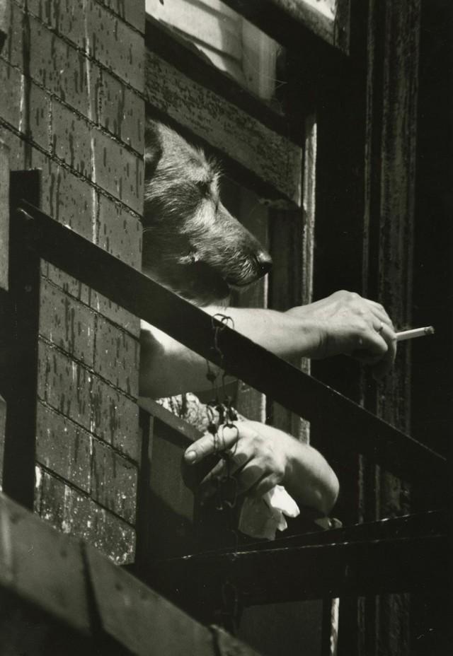 «Курящая cобака», 1971. Фотограф Арт Шей