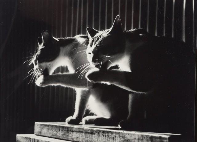 Умывание, 1984. Фотограф Дон Хонг-Оай