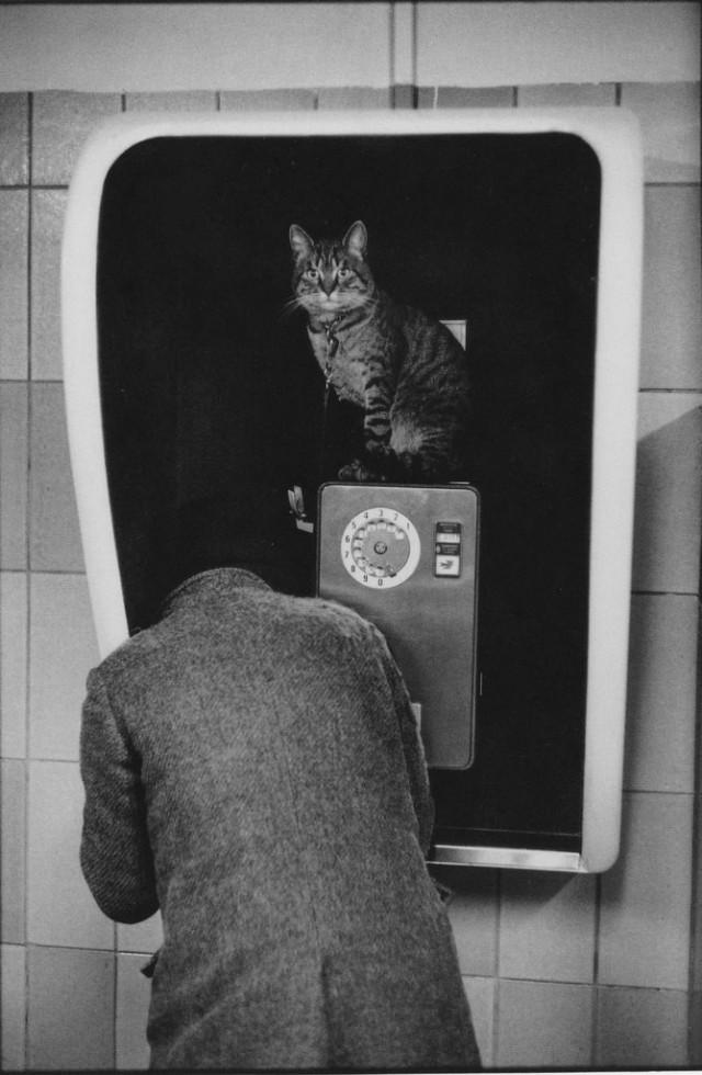 Телефонная будка с котом. Фотограф Мартина Франк