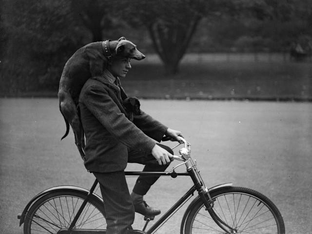 Собаки злые, только когда их на велосипедах не катают. Район Баттерси, Лондон, 1930-е
