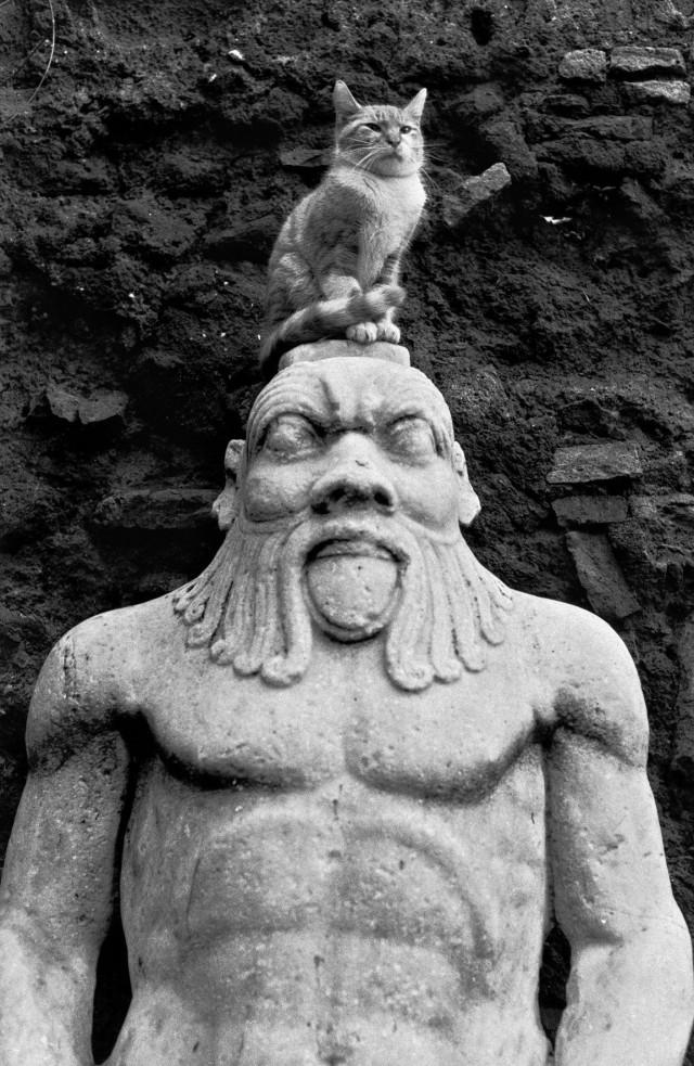 Монументальный кот, Рим, 1959. Фотограф Эллиотт Эрвитт