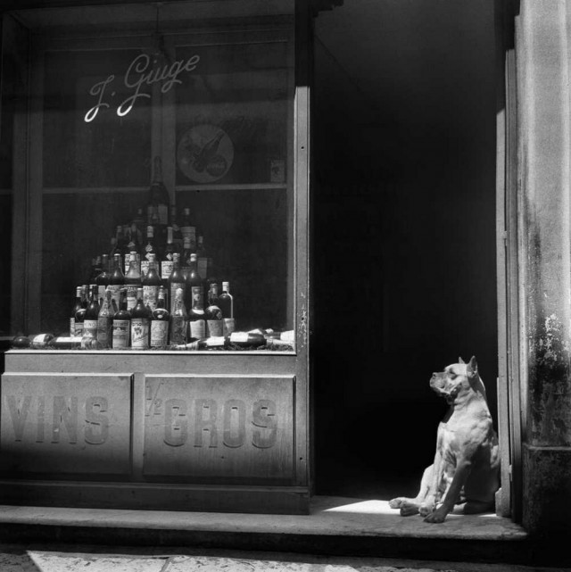 Пёс. Фотограф Кристер Стрёмхольм