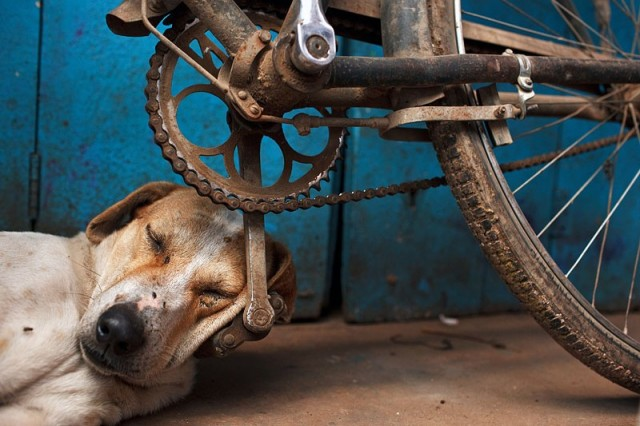 Спящая собака, Варанаси, Индия. Фотограф Мацей Дакович