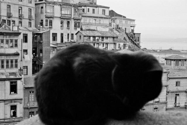 Чёрный кот, Вальпараисо, Чили, 1963. Фотограф Серхио Ларраин