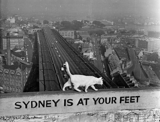 Кот на одной из опор Сиднейского моста встречает туристов в австралийском городе, январь 1957 года. Фотограф Дэннис Роу