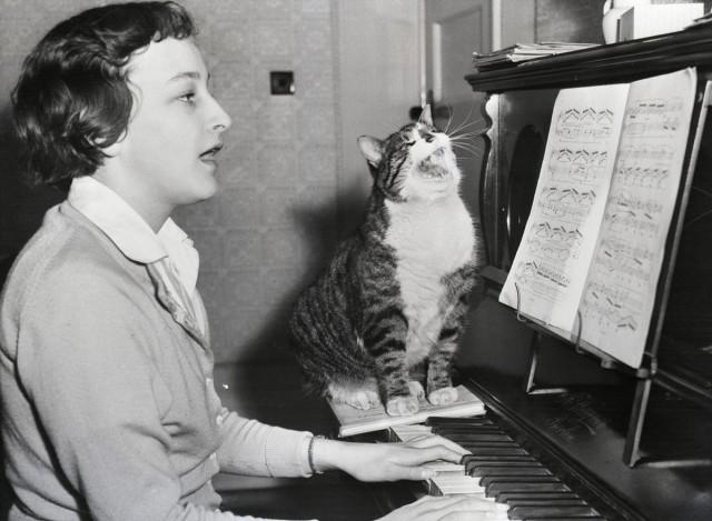Кот, обожающий музыку, подпевает хозяйке в Вустере, Англия, 23 марта 1959 года. Фото Bettmann - Getty