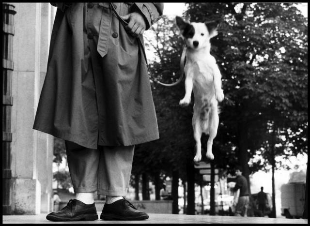 Париж, 1989. Фотограф Эллиотт Эрвитт