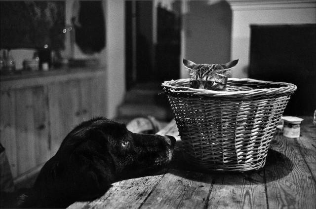 Пёс и кот. Сент-Эмильон, Франция, 1977. Фотограф Ричард Кальвар