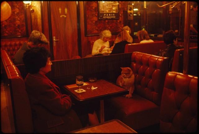 Кот Карамелька составляет компанию посетительнице в ресторане Le Louis IX. Париж, 1988. Фотограф Джеймс Л. Стэнфилд