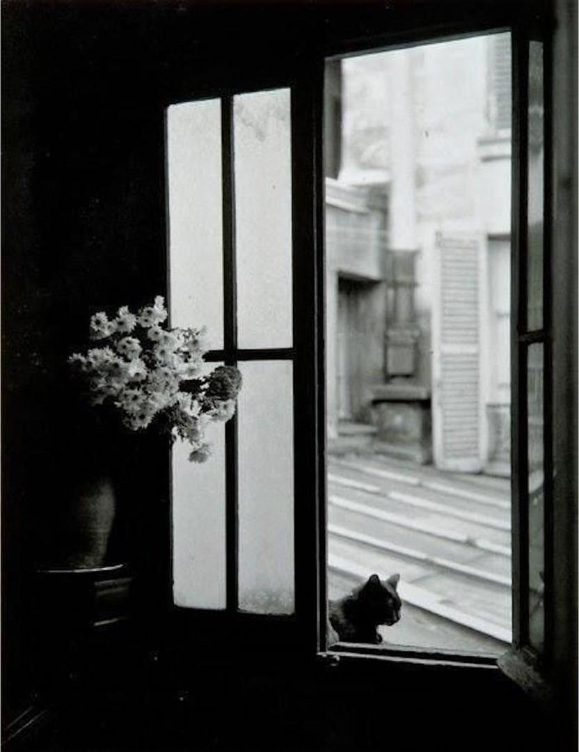 Кошка за окном, 1957. Фотограф Вилли Рони
