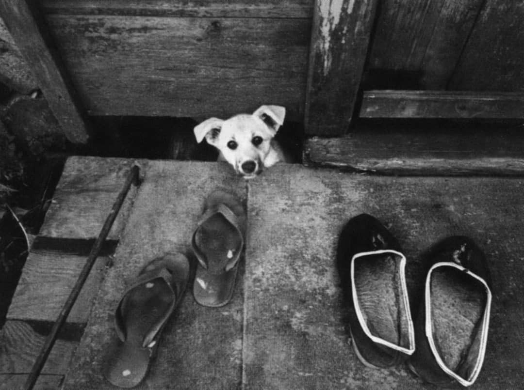 Сторож, 1982. Фотограф Анатолий Болдин
