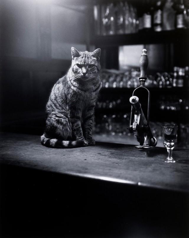 Кот в ирландском пабе. Дублин, 1966. Фотограф Эвелин Хофер