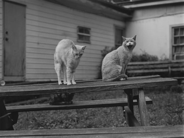 Коты. Фотограф Марк Стейнмец