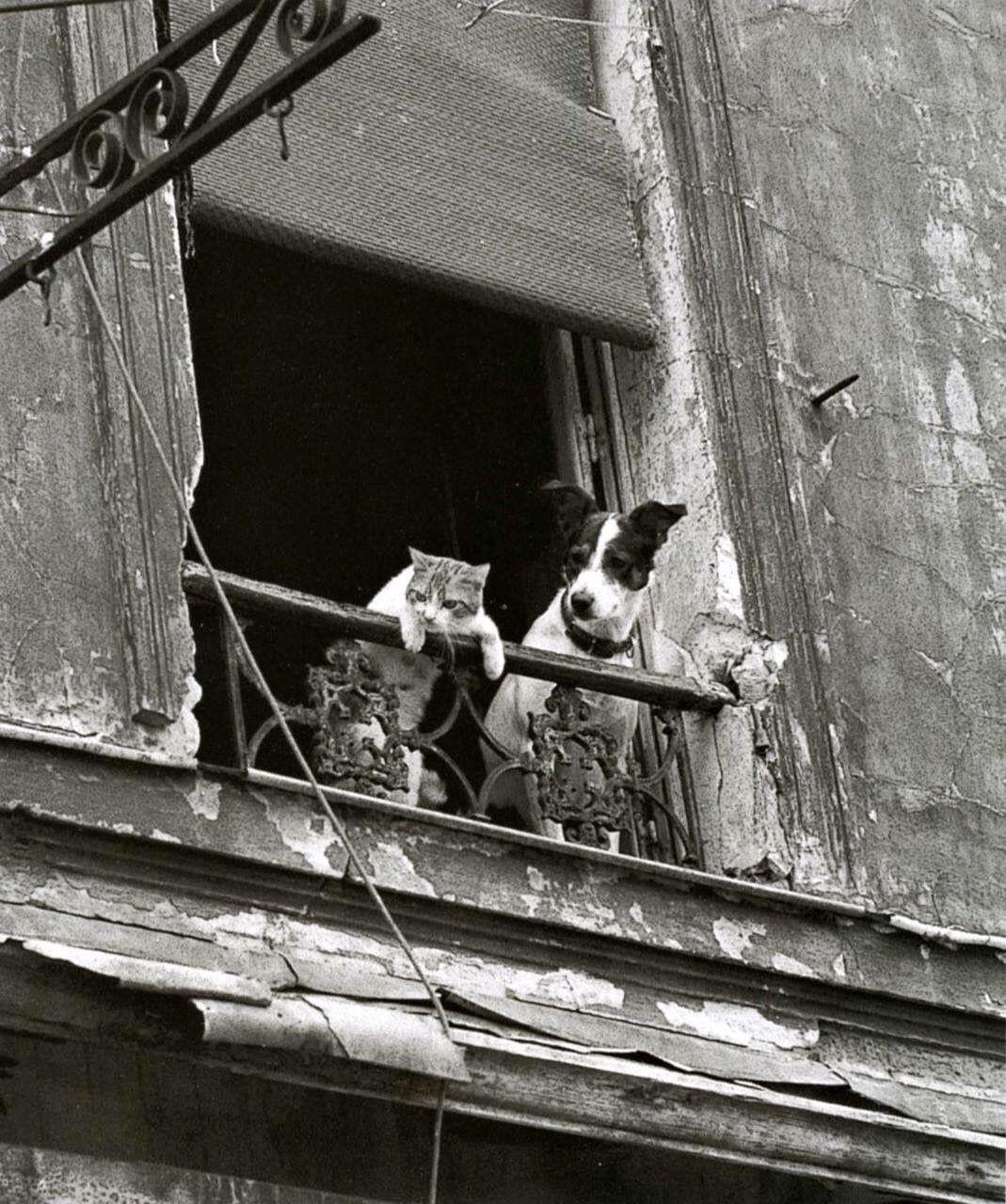 Кот и пёс в Париже. Фотограф Анник Жерарден