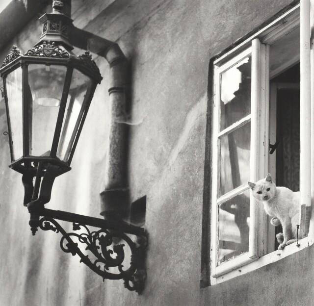 Кошка в окне. Фотограф Иржи Вшетечка