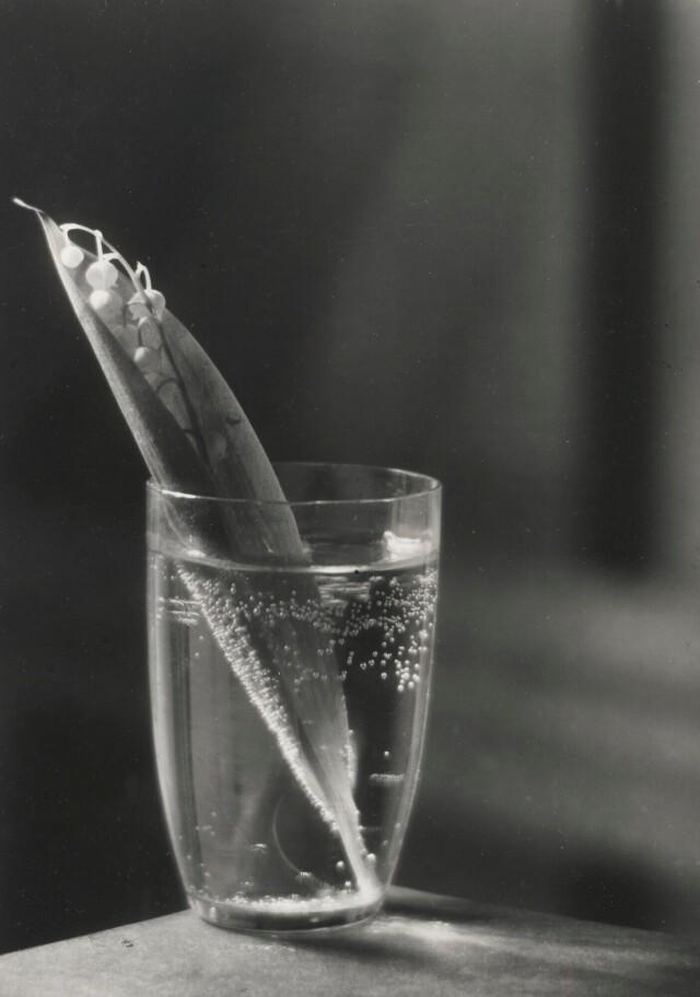 Ландыш, 1954. Фотограф Йозеф Судек