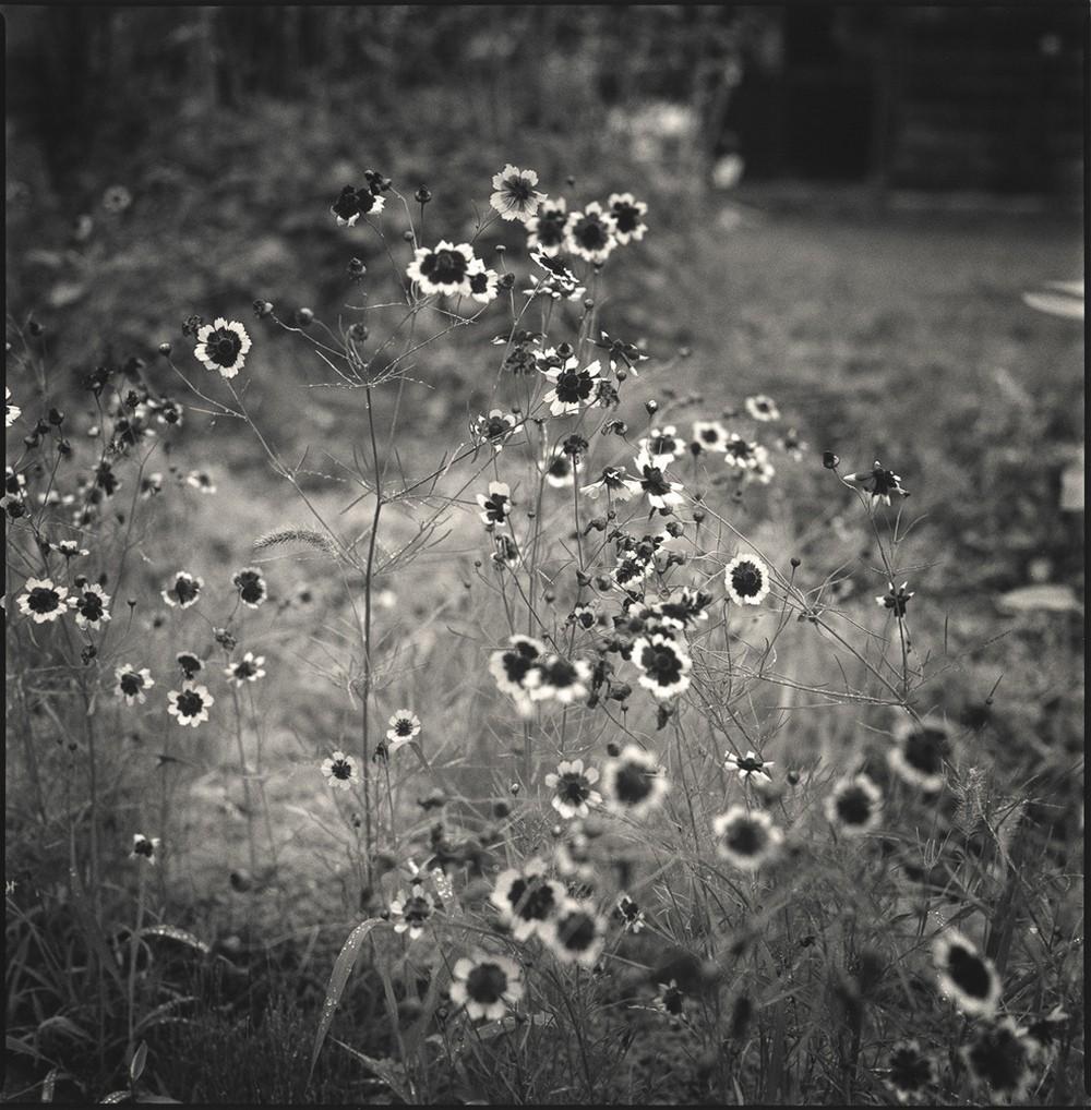 Кайдан: истории и сведения о странных вещах. Полевые цветы. Хироси Ватанабэ