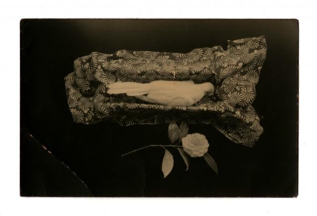 Из проекта «Коробка Ку». Масао Ямамото (5)