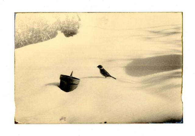 Из проекта «Коробка Ку». Масао Ямамото (9)