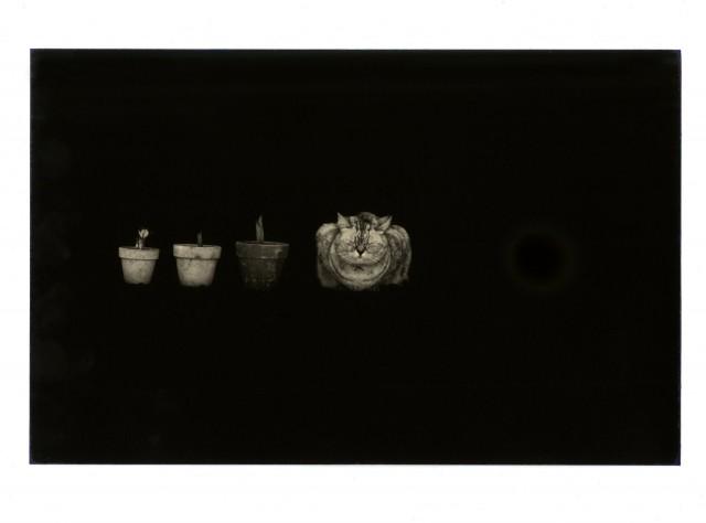 Из проекта «Коробка Ку». Масао Ямамото (23)