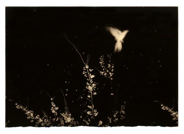 Из проекта «Наказора». Масао Ямамото (14)