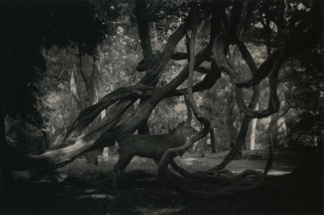 Из проекта «Кава=Поток». Масао Ямамото (6)