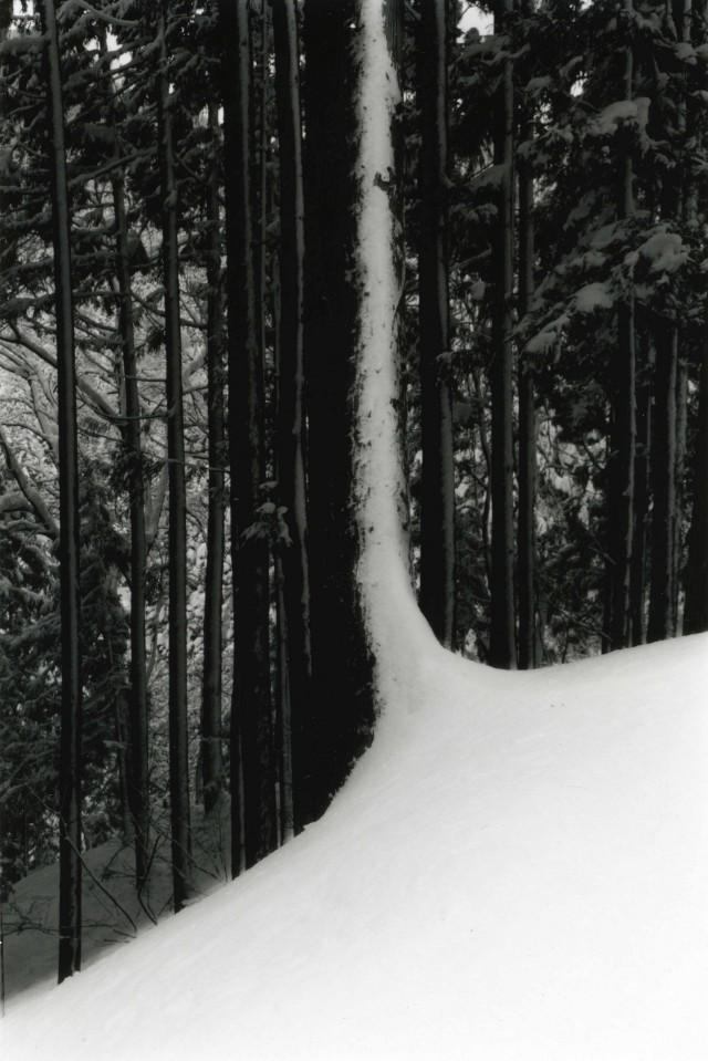 Из проекта «Кава=Поток». Масао Ямамото (7)