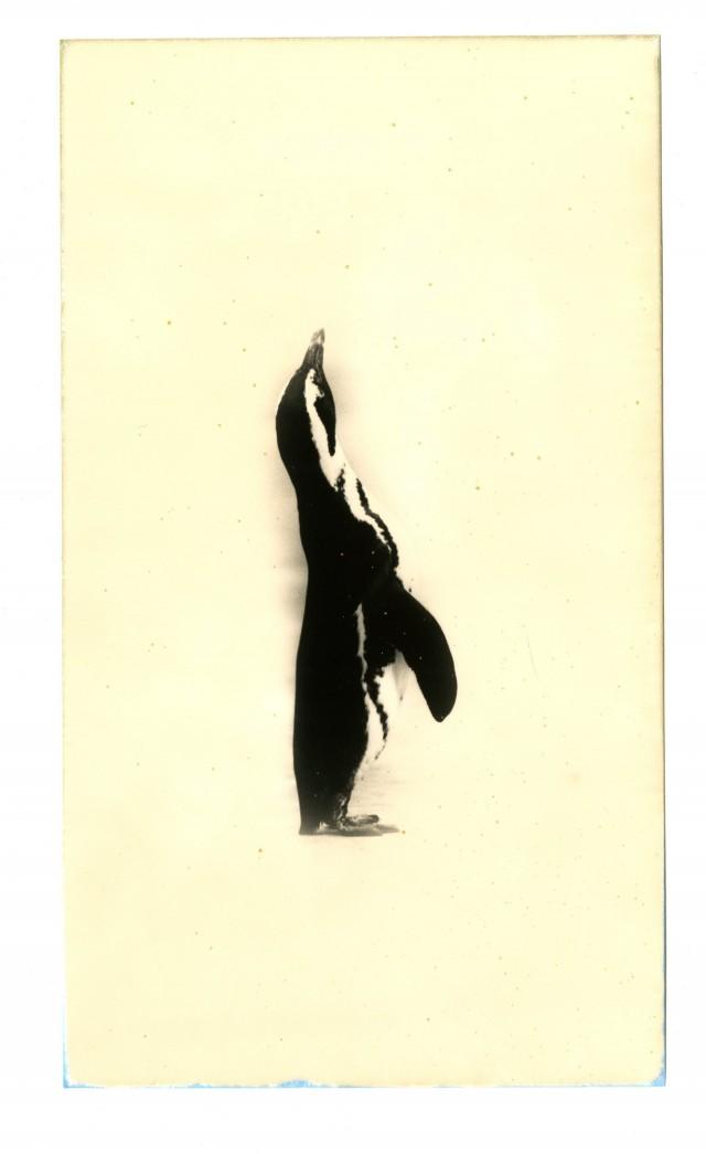 Из проекта «Кава=Поток». Масао Ямамото (30)