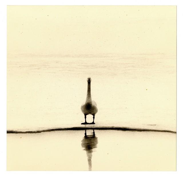 Из проекта «Кава=Поток». Масао Ямамото (34)