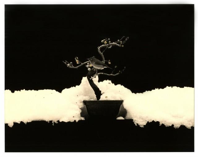 Из проекта «Кава=Поток». Масао Ямамото (40)