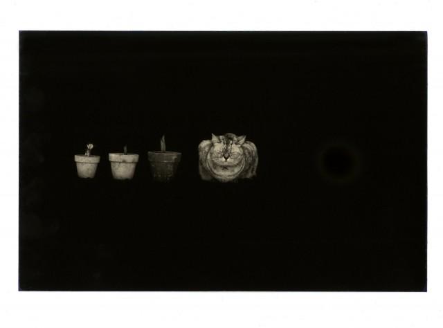Масао Ямамото: «Визуальные хайку»