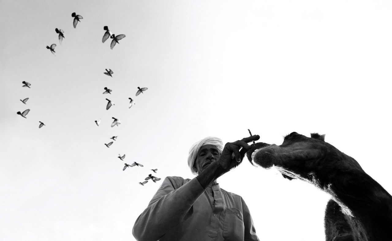 Категория «Путешественник». Верблюжья ярмарка, Пушкар, Индия. Автор Димпи Бхалотия