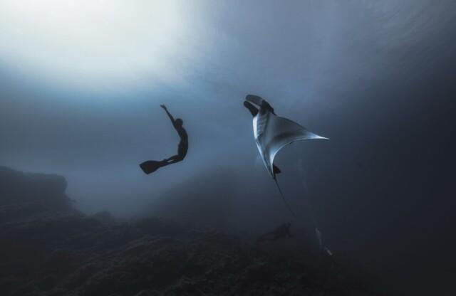 1 место в категории «Природные просторы», 2021. Встреча с гигантским морским дьяволом (скат манта). Автор Джимми Сонг (Song Gang)