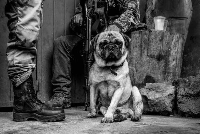 «Фотограф года» 2021. Местная собака с группой патрульных, борющихся с наркокартелями в Мексике. Автор Тьяго Дезан