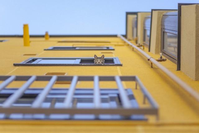 Главный победитель, 2020. Кот из жёлтого дома. Автор Денис Черим