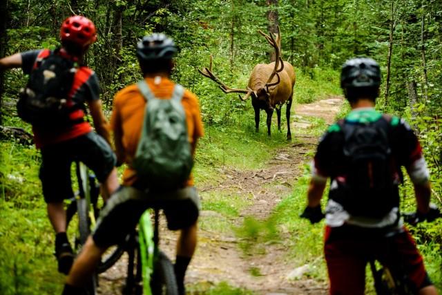 Финалист в категории «Образ жизни», 2019. Велосипедисты и лось в национальном парке Джаспер, Канада. Автор Бруно Лонг