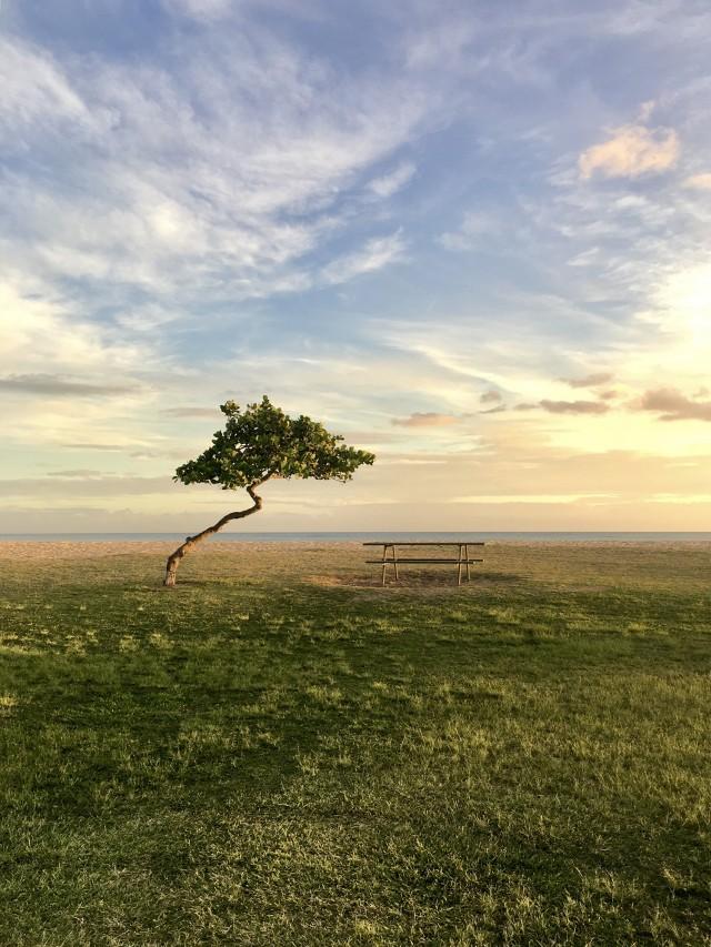 3 место в категории «Деревья», 2020. Ева-Бич, Гавайи. Автор Чуянг Байдеме