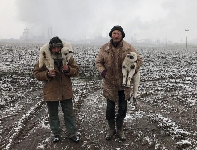 Гран-при, «Фотограф года», 2021. «Трансильванские пастухи». Тыргу-Муреш, Румыния. Автор Иштван Керекеш